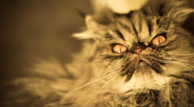 Killer Kittens Can Be Placated With Meat and Playtime, New Study Finds