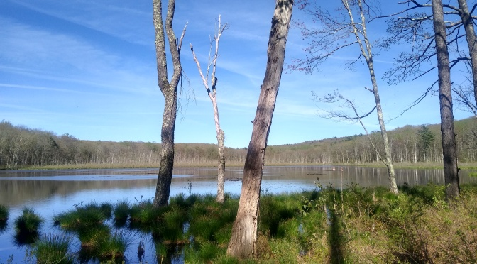 Is this NJ's Most Beautiful Spot?